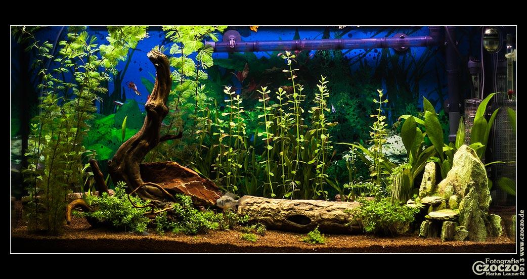 bilder aquarium