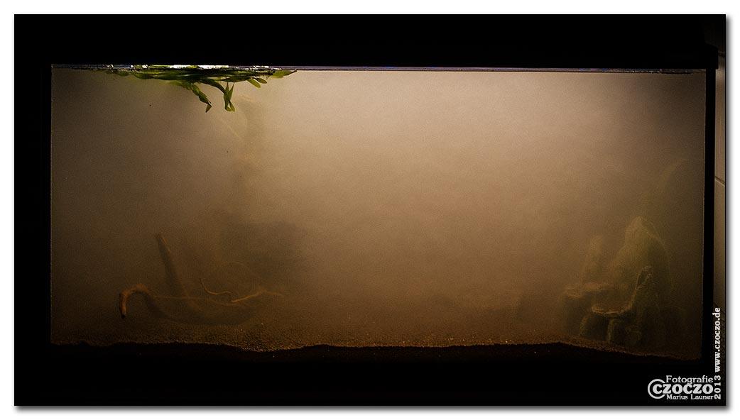 aquarium-neustart