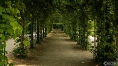 20210619-Sanssouci-Park-9A1A2942
