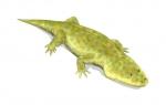 metoposaurus_bw.jpg