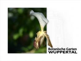botanische-garten-wuppertal.jpg