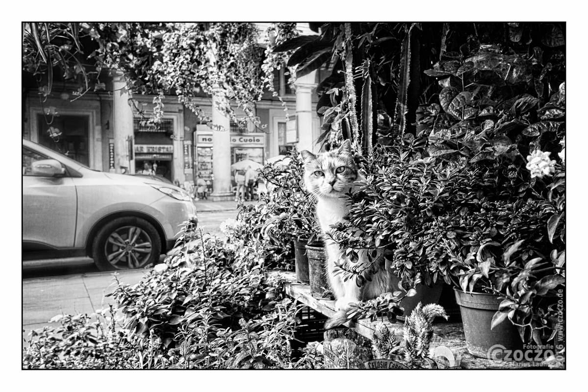 IMG_5482-Rom Katze
