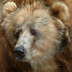 teddy-dscf0043.jpg