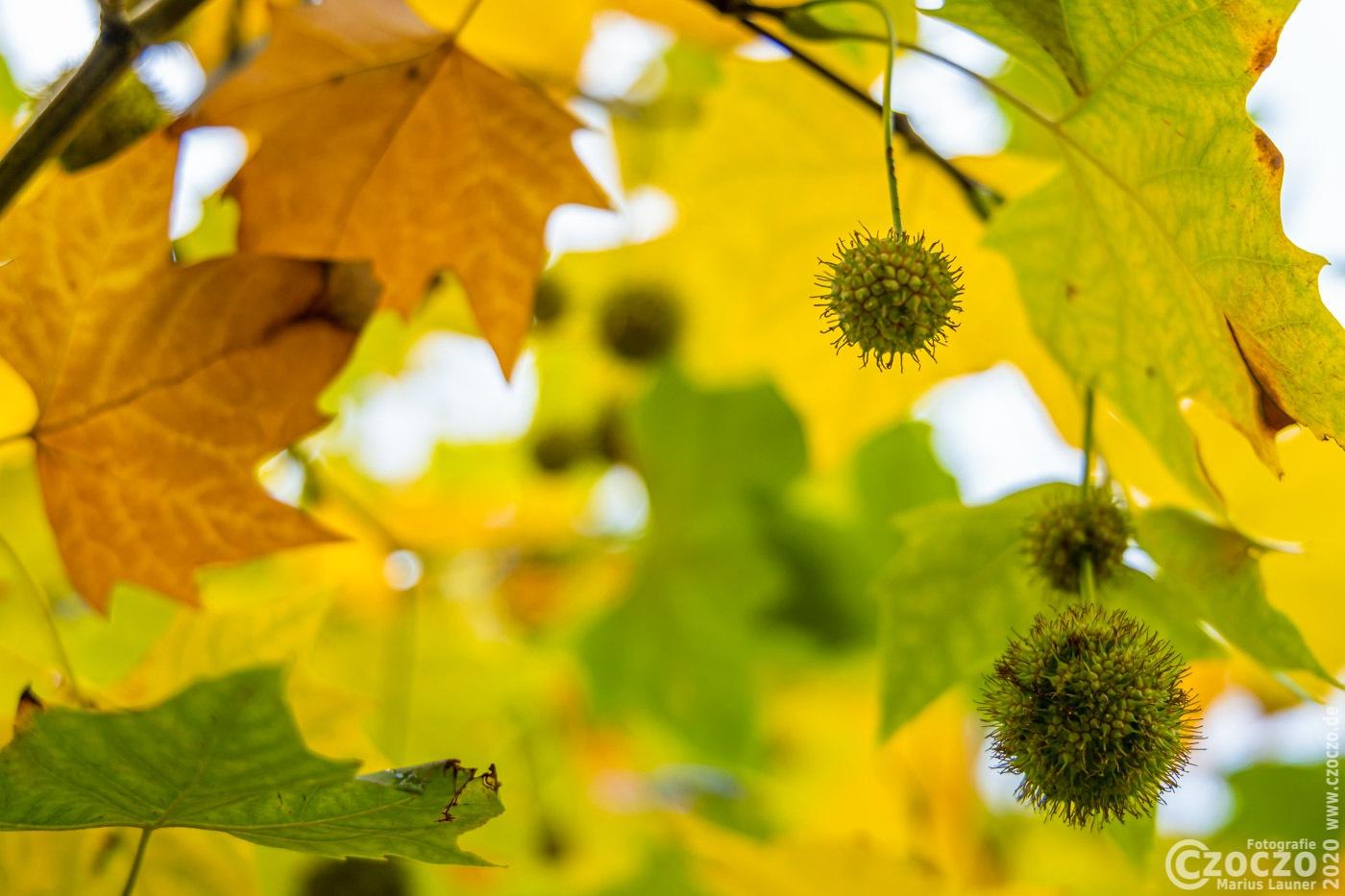 20201006-Herbstfarben-9A1A9247