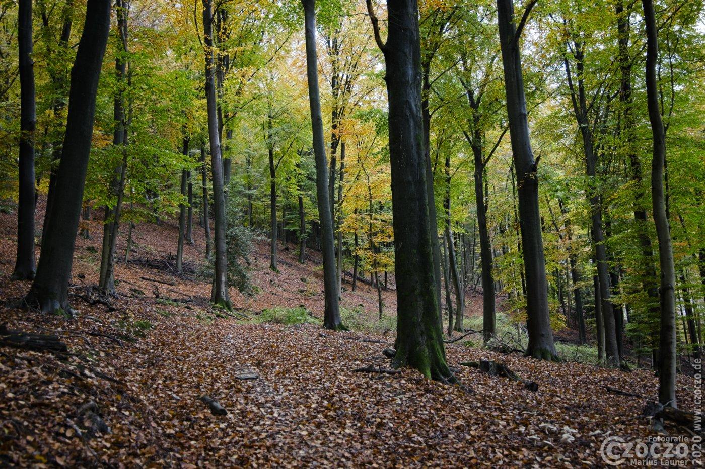 20201026-Wald-im-Oktober-9A1A9368