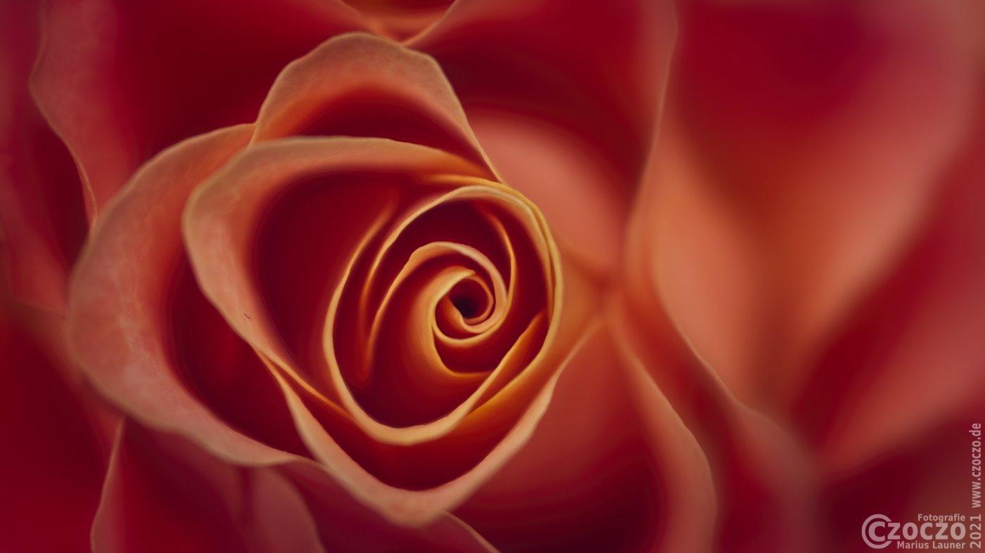 20210410-Rose-9A1A1854