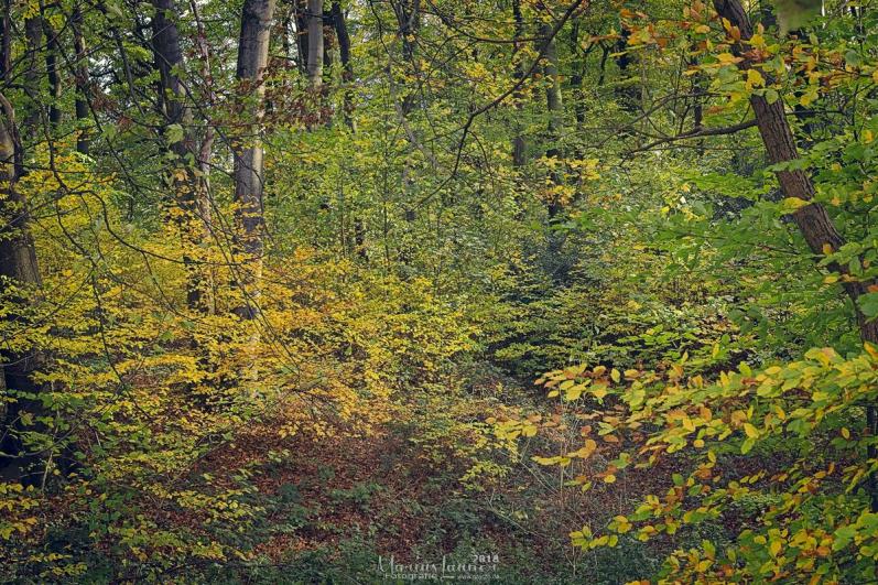 Herbst IMG_9964