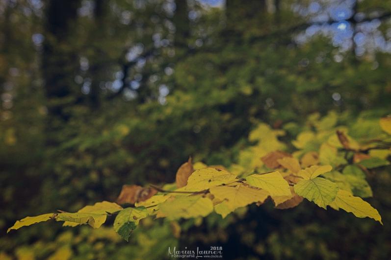 Herbst IMG_9970