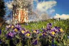 IMG_3328-Frühling