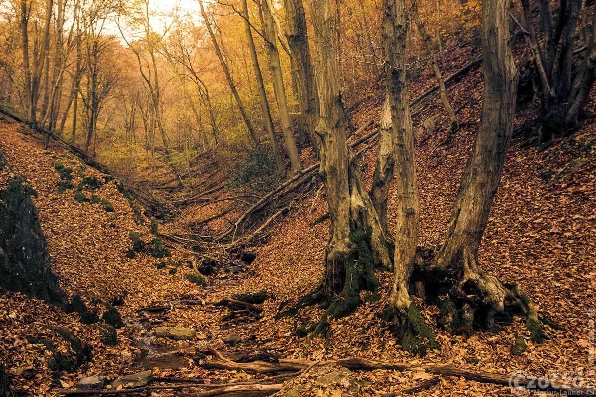 IMG_6450-Herbst