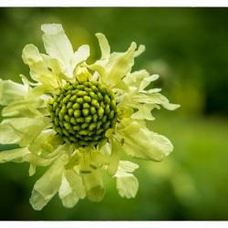 05. Juli 2015 - Botanischer Garten Wuppertal - 0427
