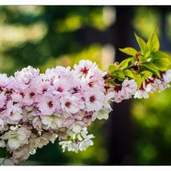 17. April 2015 - Japanische Garten - 7028