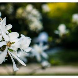 17. April 2015 - Japanische Garten - 7038