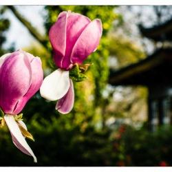 17. April 2015 - Japanische Garten - 7042