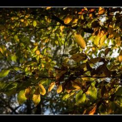 20151018-IMG_6170-Herbst