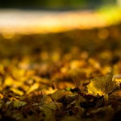20171014-_MG_8128-Herbstfarben