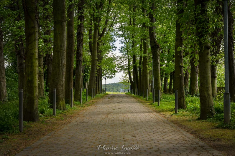 20180430 - Allee