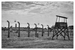 20120804-70-jahrestag-der-befreiung-von-auschwitz-3