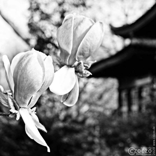 20150417-Japanische-Garten-Leverkusen-IMG_7041