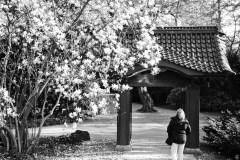 20150417-japanische-Garten-Leverkusen-IMG_7005