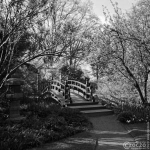 20150417-japanische-Garten-Leverkusen-IMG_7016