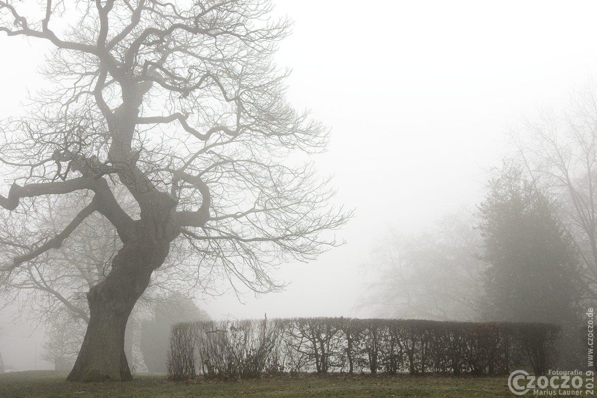 20190126- Nebel - IMG_2341