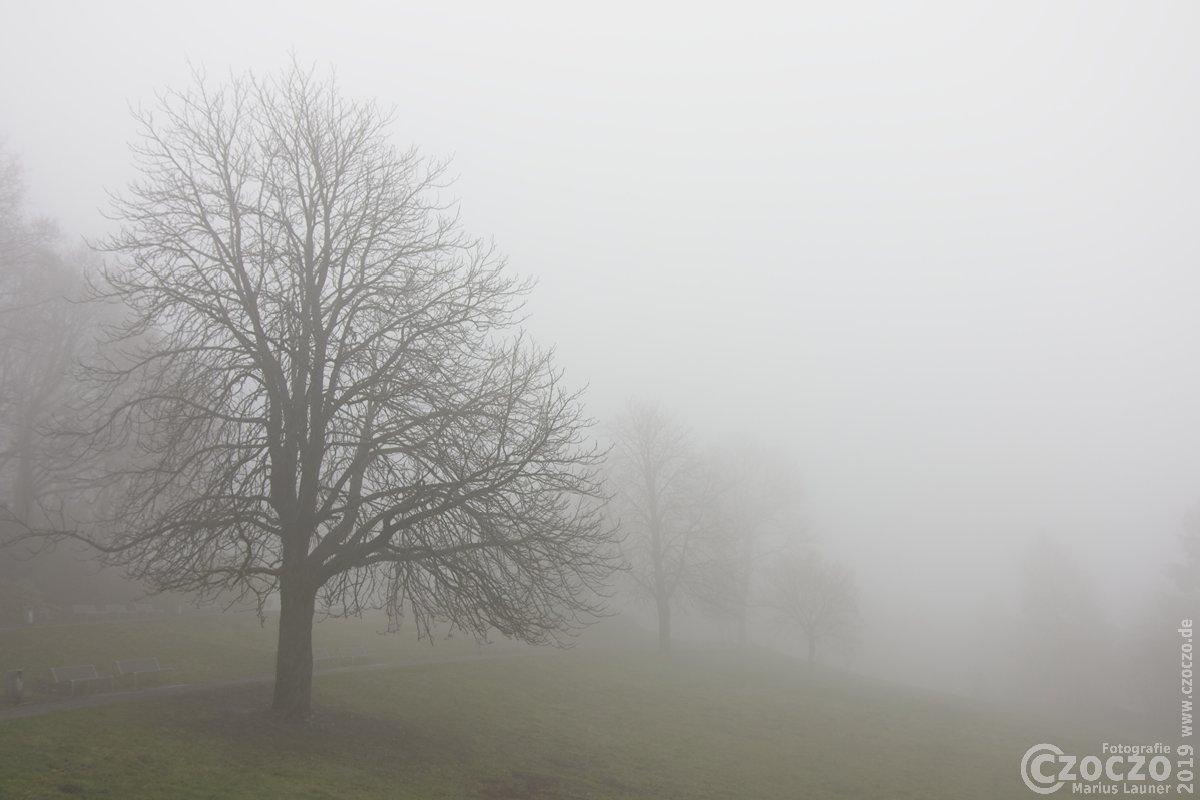 20190126- Nebel - IMG_2365