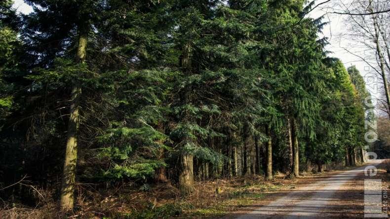 20170312-_MG_1118-Arboretum Burgholz