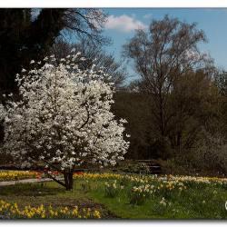 magnolie-mg_1268.jpg